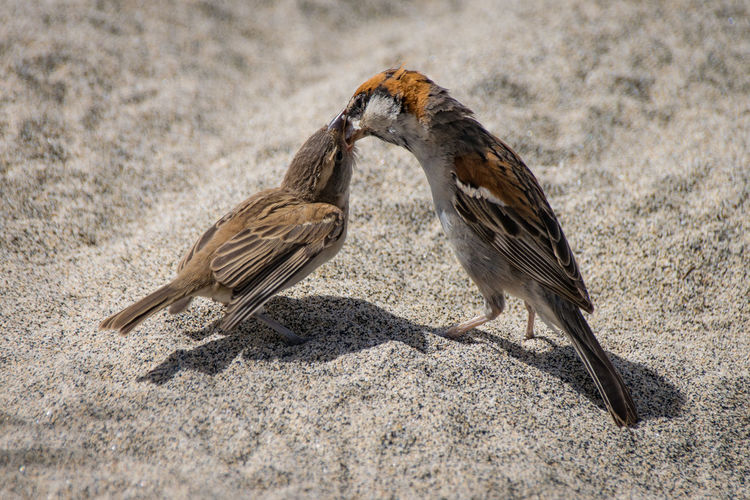 Close-Up Of Birds Feeding On Sand At Beach