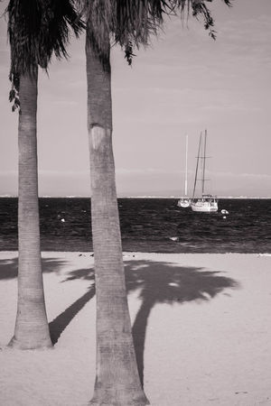 Black & White Beach Beauty In Nature Black And White Black And White Friday Day Horizon Over Water Mast Monchrome Nature Nautical Vessel No People Outdoors Palm Tree Sailboat Sand Scenics Sea Sky Tranquil Scene Tranquility Transportation Tree Tree Trunk Water
