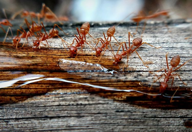Ants Animal Animal Wildlife Animals In The Wild Brown Close-up Day Dry Insect Invertebrate Nature No People Outdoors Selective Focus Textured  Wood Wood - Material