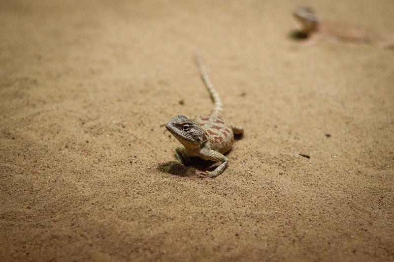 High angle view of frog on sand