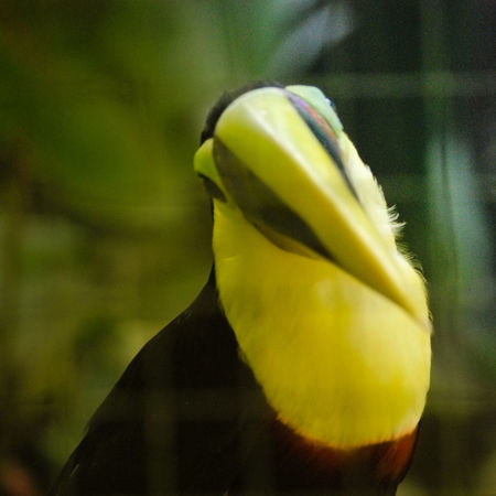 Animal Themes Beauty In Nature Close-up Day Focus On Foreground Fragility Freshness Nature No People One Animal Tucan Yellow