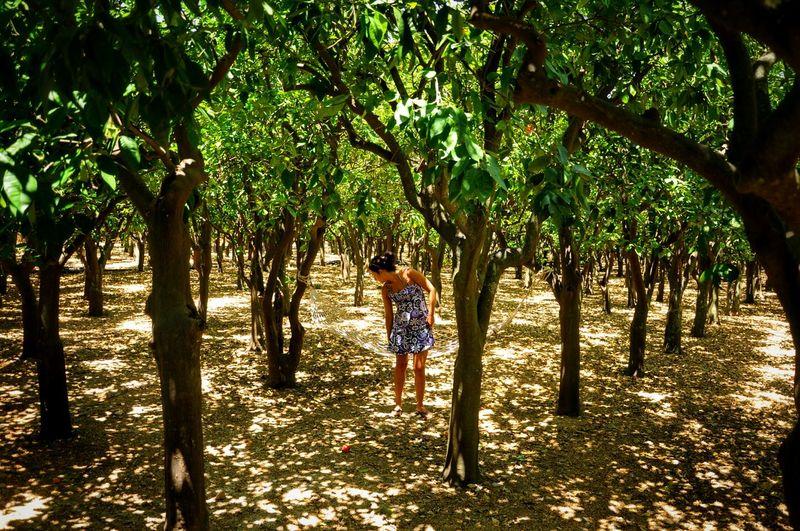 Full Length Of Woman Walking Amidst Trees At Farm