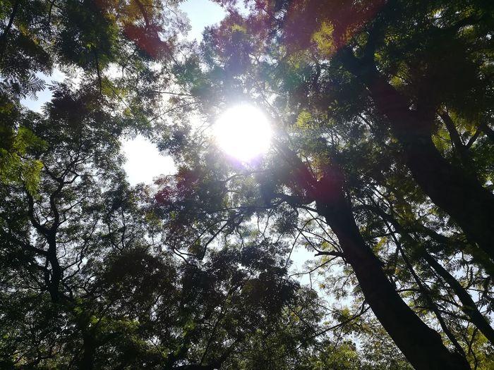 trees Sun Tree