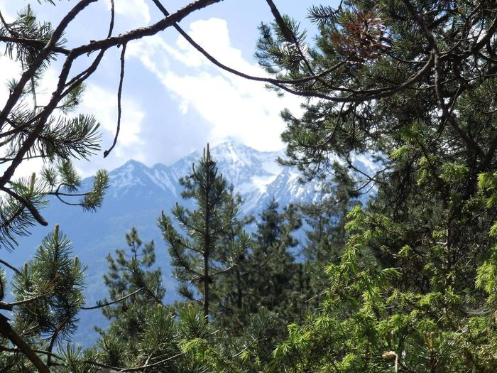 Low angle view of trees and mountains