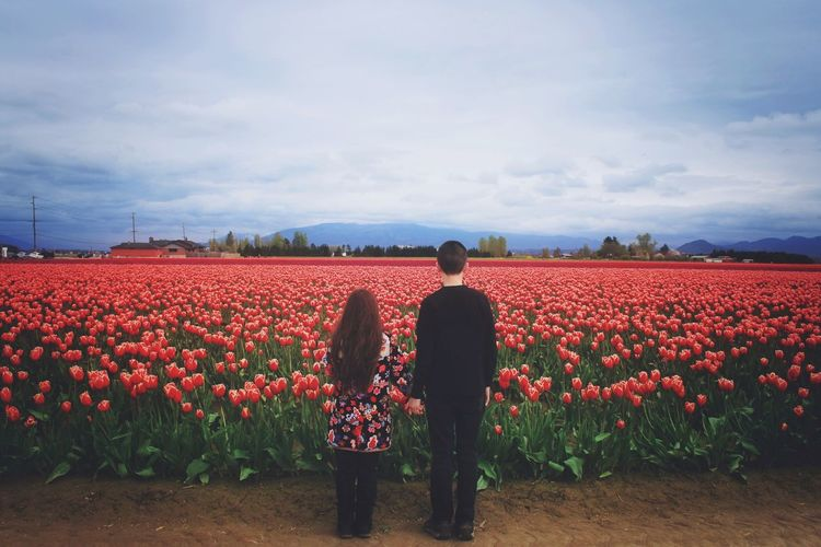 Rear view of man and woman standing against tulips field