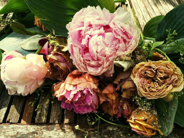 Romantisk Blomster Flower Photography Roses Nature Summer Flowers Sommer Romantic Flowerporn Decay Decaying Dansk Natur