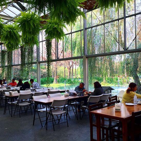 View💯 田尾 公路花園 彰化 Taiwan 菁芳園 下午茶 好美 好速西 teatime afternoon plant 落羽松 bestview Tianwei Township Changhua County ROC