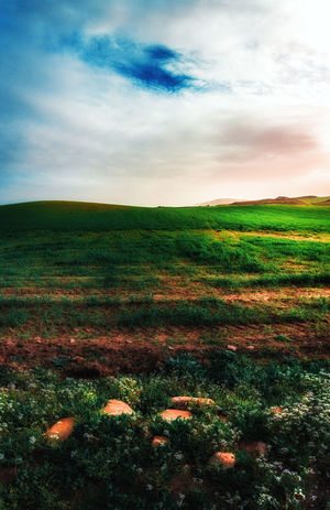 Hills Beauty In Nature Cloud - Sky Day Environment Field Grass Growth Horizon Horizon Over Land Land Landscape Nature No People Non-urban Scene Outdoors Plant Scenics - Nature Sky Tranquil Scene Tranquility Windows Landscape
