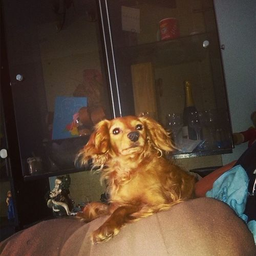 Meu doggy :$ Dog Perfect Ciumes Gigante Ha Espera Do Almoço