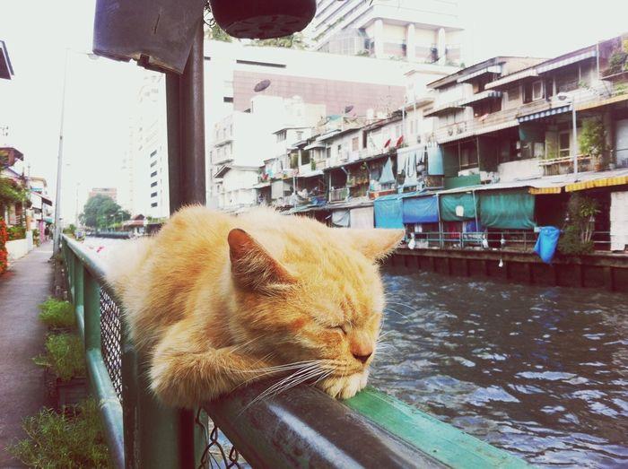Close-up of cat in city
