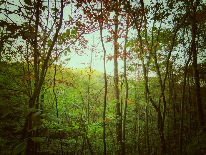 My Old Kentucky Home Kentucky  Home Autumn Nature Fall Peace Time To Reflect Beauty Walking Beautiful World