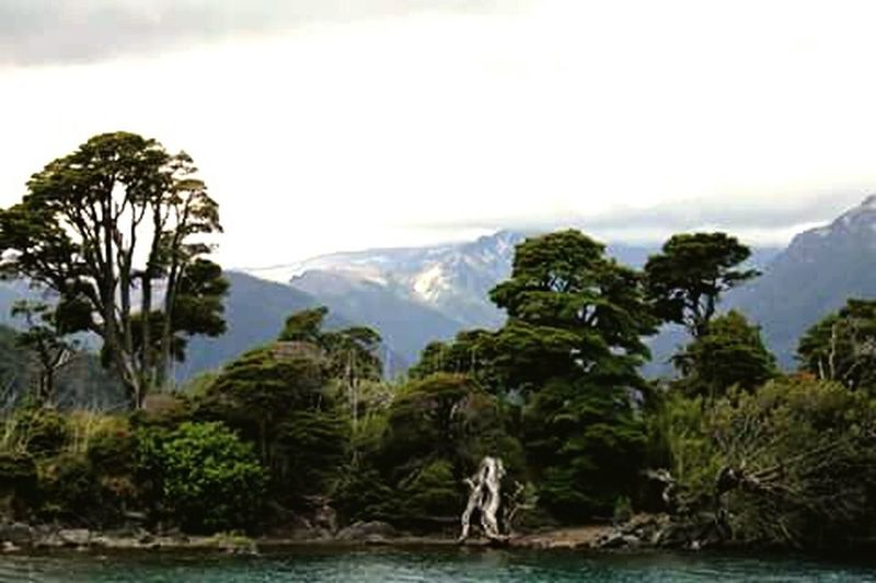 Patagonia Bosque Trees Lake Patagonia Argentina Beatiful Forest Nature_collection