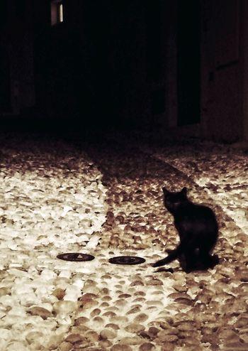 Black Cat Black Cat Photography Black Cat Collection Cat Black Cat Portrait Black Dark Darkness Darkness And Light Light And Shadow Light In The Darkness Light And Shadows Domestic Cat One Animal Pets Night Animal Themes Feline Domestic Animals EyeEm Best Shots EyeEmNewHere Night Lights EyeEm Selects EyeEm Best Edits EyeEm Animal Lover