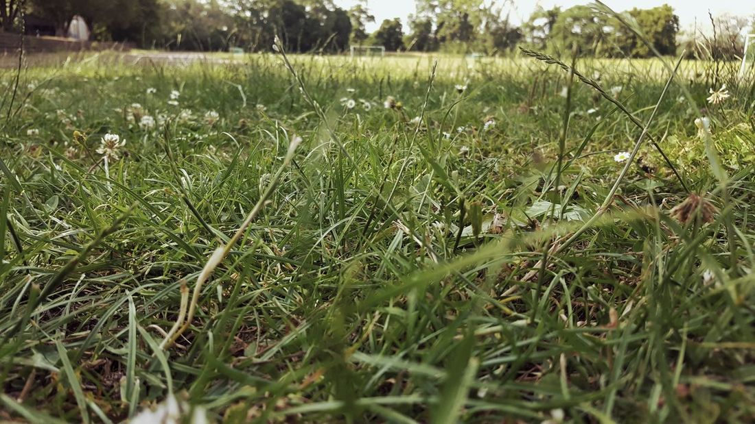 Beauty In Nature Close-up Day Field Grass Green Color Growth Land Landscape Nature No People Outdoors Plant