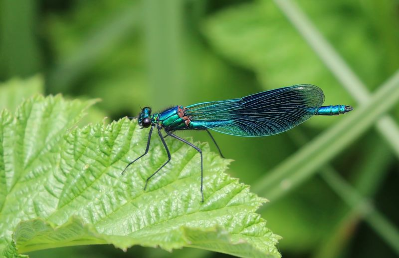 Close-up of blue damselfly on plant