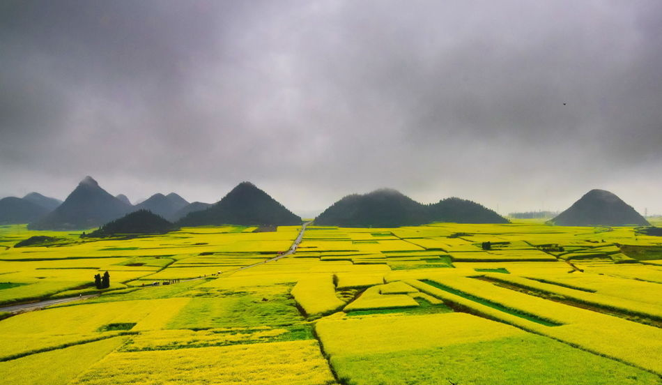 Canola field, rapeseed flower field with the mist in Luoping, China Luoping Rain Rapeseed Field Aerial View Agriculture Beauty In Nature Canola Canola Field Day Farm Field Fog Hill Landscape Mist Mountain Mountain Range Nature No People Outdoors Patchwork Landscape Rapeseed Oil Rapeseed Yellow Tadaa Rural Scene Scenics Sky Terraced Field Tourism Tranquil Scene Tranquility Village
