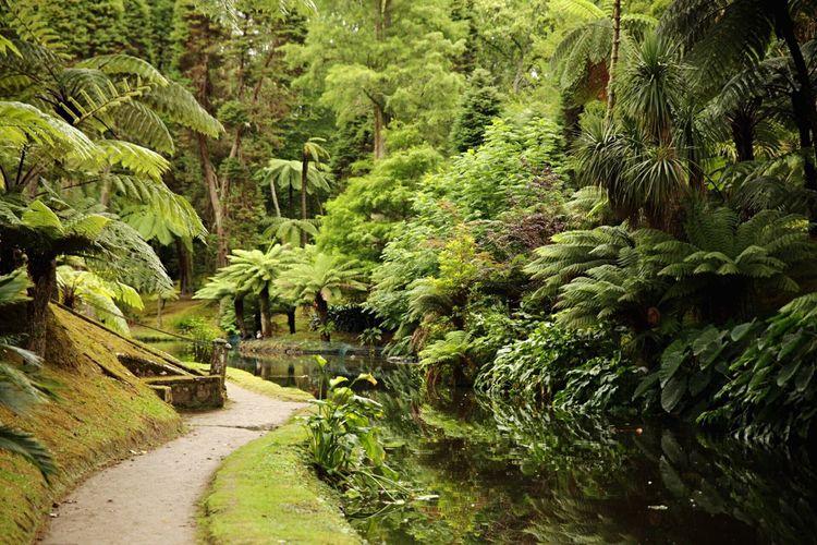 Azores Terra Nostra Park Nature