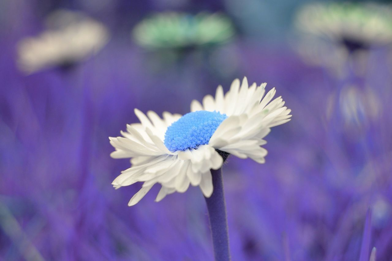 flower, fragility, nature, beauty in nature, petal, purple, freshness, flower head, plant, growth, close-up, blue, one animal, focus on foreground, blooming, no people, outdoors, day, animal themes