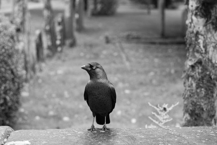 Bird Perching On Retaining Wall In Garden