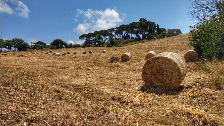 """"""" the haystack"""