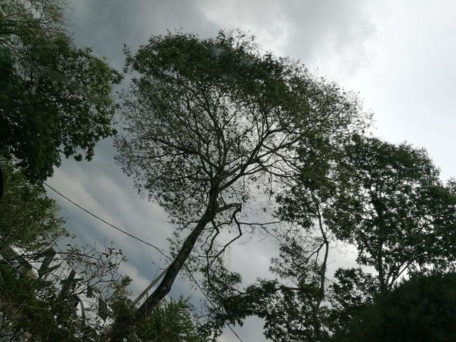 Tree Beauty In Nature Outdoors