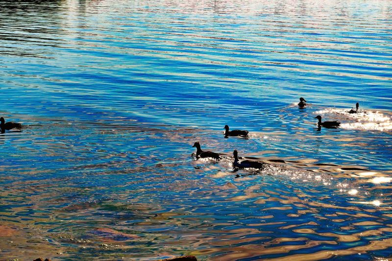 #Shadow #ducks Water High Angle View Swimming Day Nature No People Animal Wildlife Beauty In Nature Rippled Animal Animal Themes Outdoors Waterfront Sunlight Sea Marine