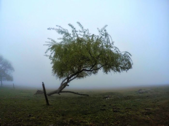 Fog Tree Landscape No People Grass Nature Outdoors Beauty In Nature Water Day Tree Area Sky Sierras Neblina Sauce Llorón Paisaje Córdoba, Argentina