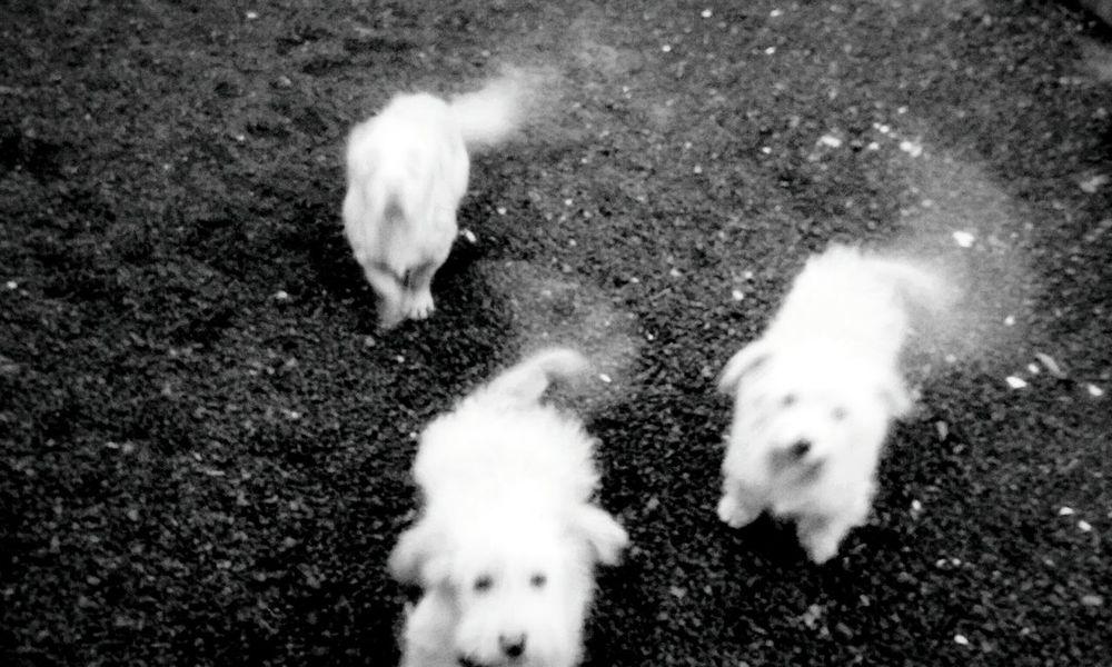 Animal Themes Dog Love Blackandwhite Pets