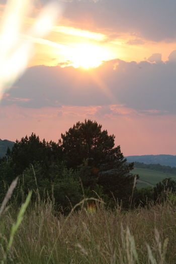 Beauty In Nature Cloud Cloud - Sky Cloudy Field Grass Idyllic Istra Istria Motovun Landscape Nature Non-urban Scene Outdoors Plant Sky Sun Sunlight Sunset Tranquil Scene Tranquility