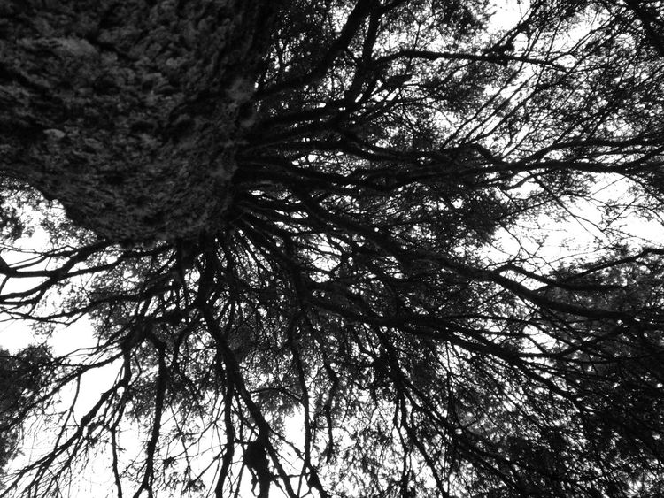 Tree Nature Outdoors WoodLand No People Non-urban Scene Weather Traveling Taking Photos Krimmlerwasserfälle Österreich Majestic Forest Power In Nature Tree Motion Nature WoodLand Krimml Wasserfal Krimml Waterfalls TreePorn Enjoying Life Krimmler Tauerntal Krimmler Fog