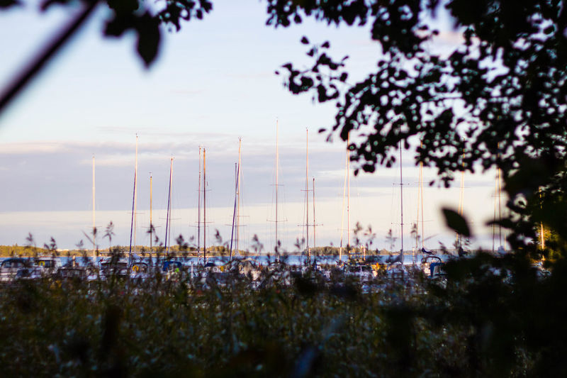 Masts of the sailing boats during sunset Baltic Sea Beauty In Nature Blue Sky Evening Masts Nature No People Outdoors Sailing Boats Sky Sunset Tree Water