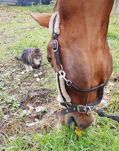 friends Cat Animal Friendship Togetherness I Follow You Around Nature EyeEm Selects Low Section Grass Horse
