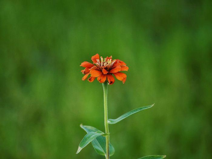 🌼🌼🌼 Flower