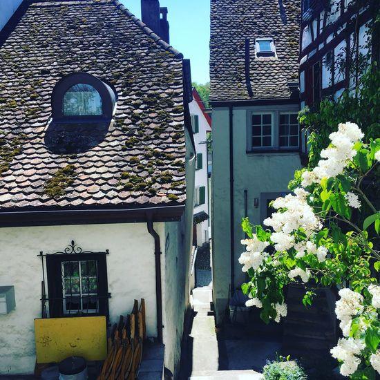 Eglisau Am Rhein Architecture Schweiz 🇨🇭 Switzerland House Plant Day Flower Sunny Day EyeEm Best Shots Eye4photography  EyeEmBestPics EyeEm Best Edits