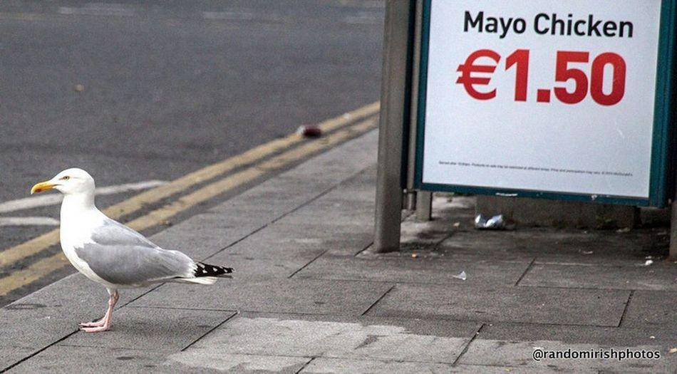 Dublin city centre gull. Eye4photography  The Street Photographer - 2014 EyeEm Awards Insta_ireland Dublin