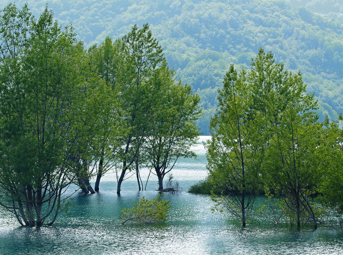 Beauty In Nature Day Green Green Green Color Growing Growth Idyllic Lake Lake View Landscape Light Blue Lush Foliage Nature No People Non Urban Scene Non-urban Scene Outdoors Tranquil Scene Tranquility Tree Water Water Reflections
