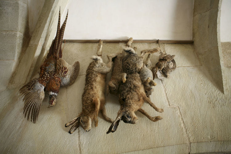Close-up of hanging dead animals