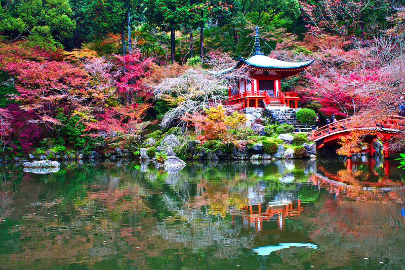 Beauty In Nature Botanical Garden Daigo Temple Daigo-ji Day Flower Growth Japanese Garden Nature No People Outdoors Plant Reflection Tranquility Tree Water Waterfront