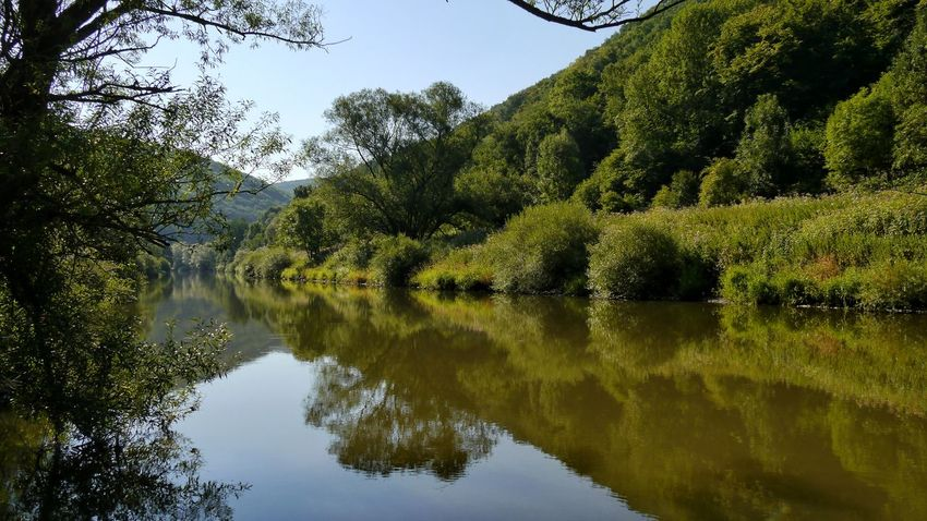 reflection of rivershore in Lahn river Lahn River Rivershore Forest Reflection Reflections In The Water EyeEm Nature Lover EyeEm Gallery Landscape_Collection Tree Water Reflection Sky Tranquil Scene Tranquility Countryside Idyllic Shore
