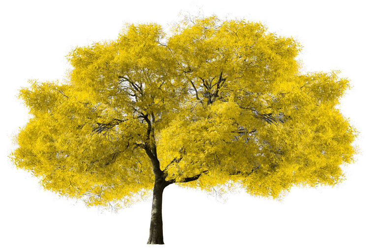 Low angle view of autumnal tree against white background