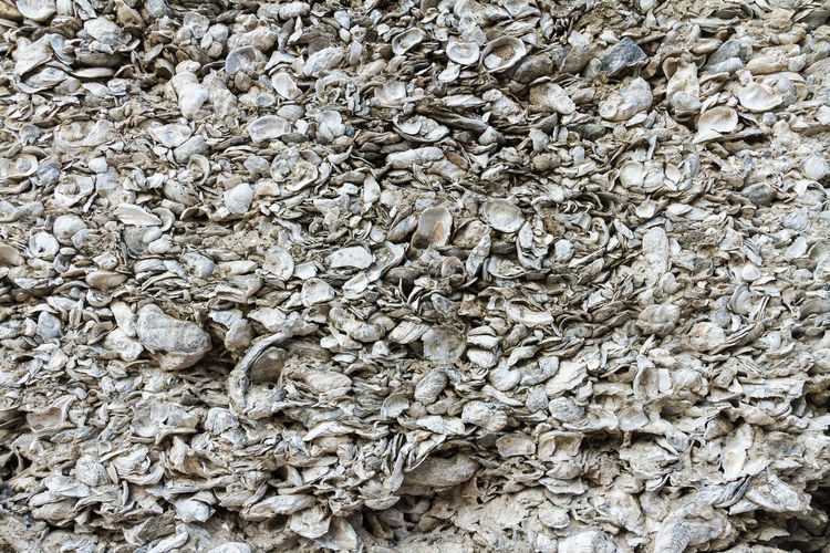 Close-up of a wall made of coquina, the compacted shells of clams and other shellfish Abundance Animals Backgrounds Close-up Compacte Construction Coqui Coquina Wall Day Detail Full Frame Heap Large Group Of Objects Material Natural Pattern Nature No People Outdoors Repetition Shopping Textured  Walking Around