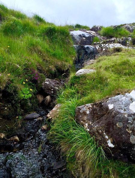 Nature Tranquility Green Color Beauty In Nature Stream - Flowing Water Grass Growth Beauty Ireland