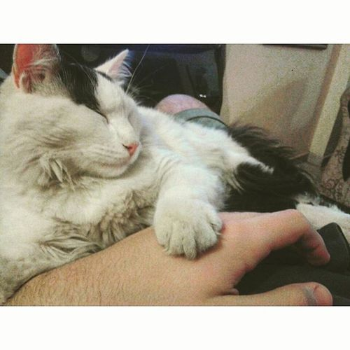 Good night my friend...!! Cat Frankie Pet Instamoment Tranquiloelpibe Timetosleep Instacat Goodmusic_and_sweetdreams