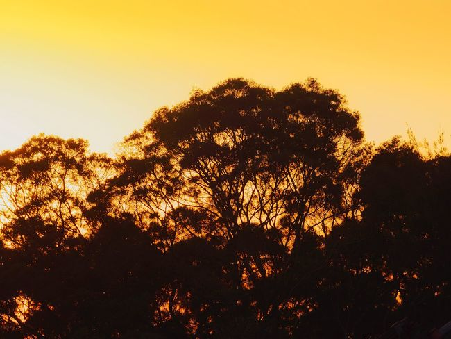 Sunset Silhouettes Sunset And Trees Outdoor Photography Beauty In Nature Tree And Sky Tree Silhouette Tree Branches