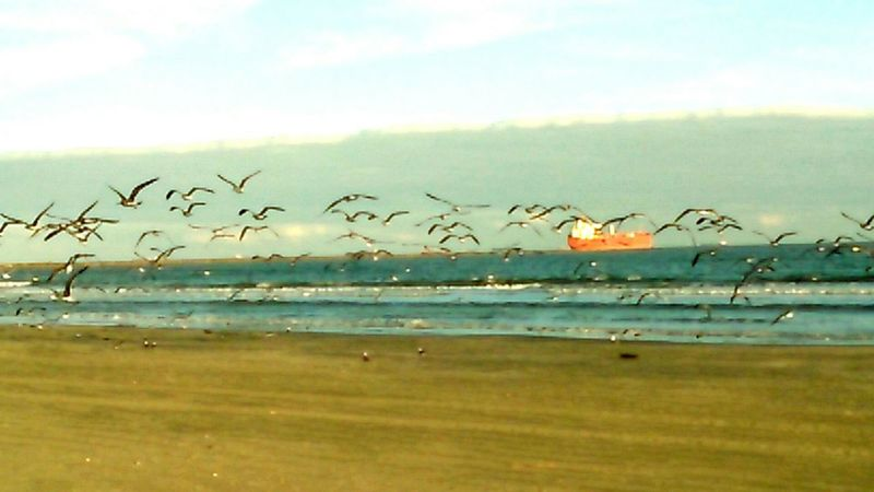 Showcase: December Port Aransas Texas At The Beach Laughing Seagulls Passing Ship