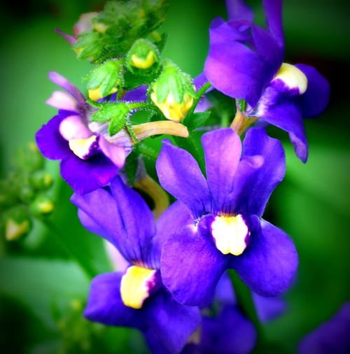 Beauty In Nature Blooming Close-up Flower Flower Head Freshness Outdoors Petal Plant Purple