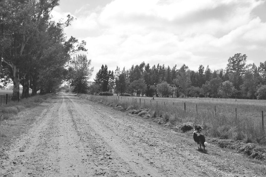Country Road Riding Bike Dogs Country