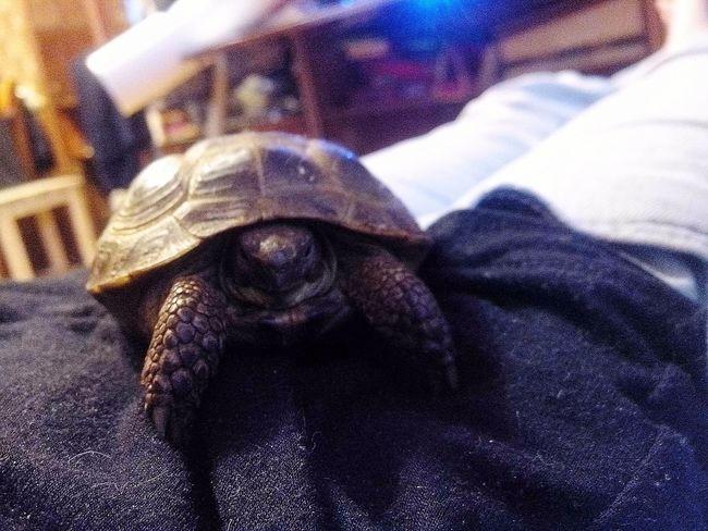 дома животные моя черепаха