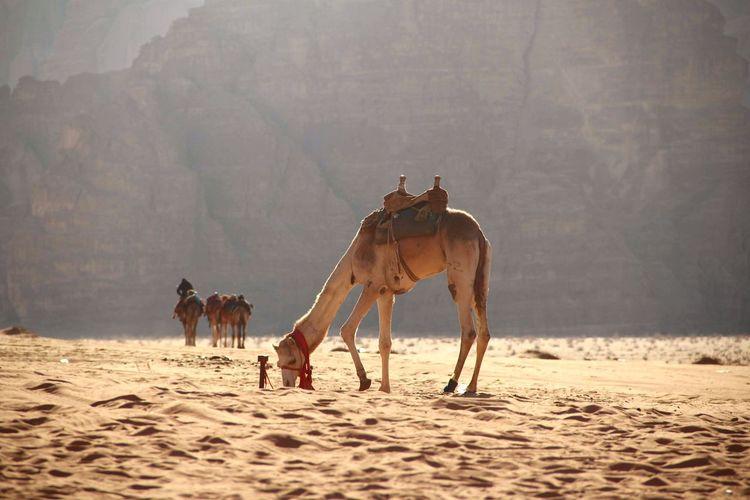 Horses riding horse on sand