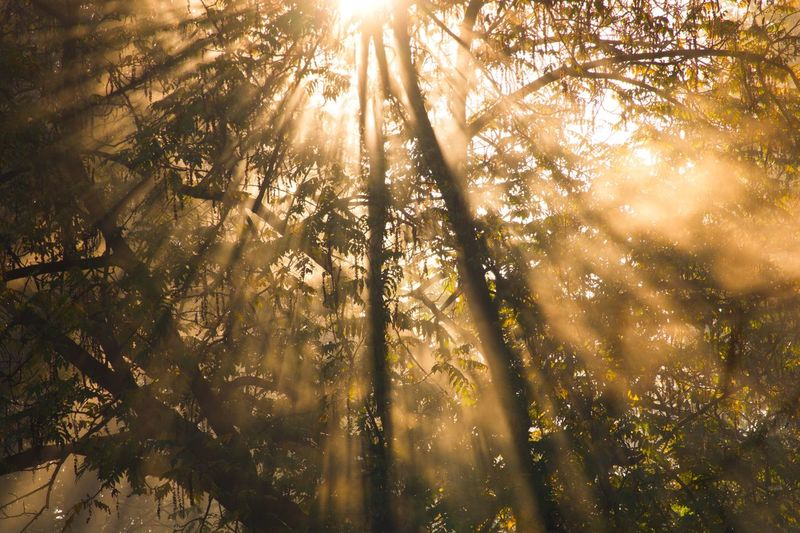 Foggy Sunrise Autumn colors Tree Sunlight Plant Beauty In Nature Low Angle View Forest Sunbeam Growth Day Sky No People Streaming Land Tranquil Scene Back Lit Nature Lens Flare Tranquility Outdoors Sun